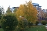 Золотая осень в ТСЖ